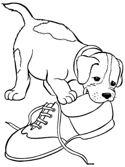 kleurplaat beagle
