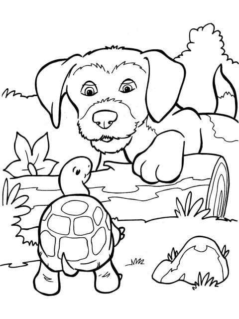kleurplaat hond en schildpad