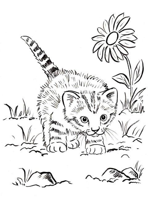 kleurplaat kitten op avontuur