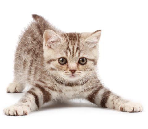katten en poezen